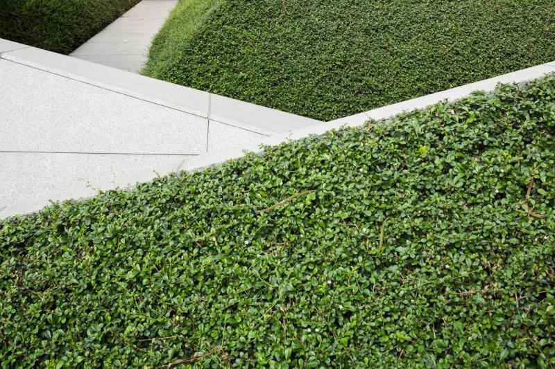 Park Venture & The Okura Prestige Landscape Design by P Landscape