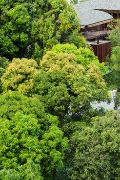 W Retreat Samui Landscape Design by P Landscape